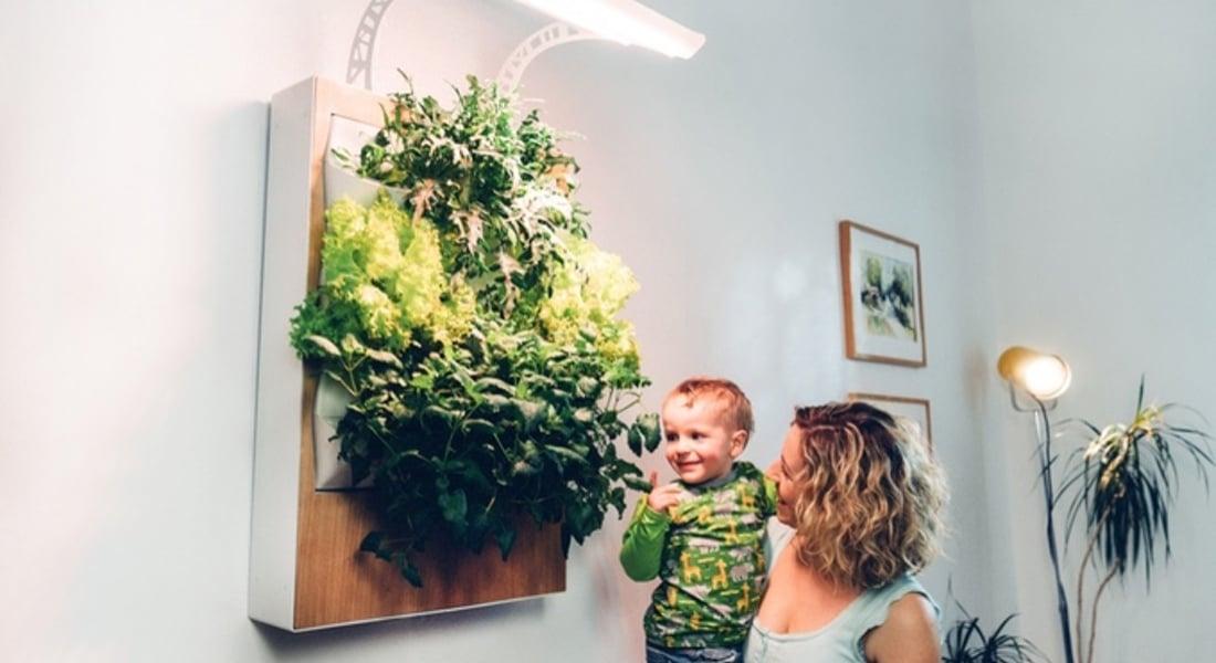 Duvarda Yetişen Sebzeler