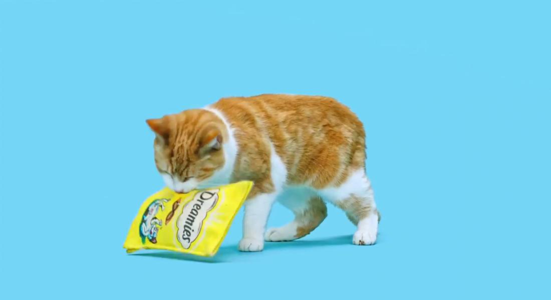 Kusura Bakmayın Kediler, Bu Paketi Açamayacaksınız!