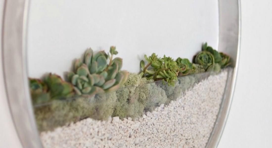 Duvardaki Dairesel Bahçeler