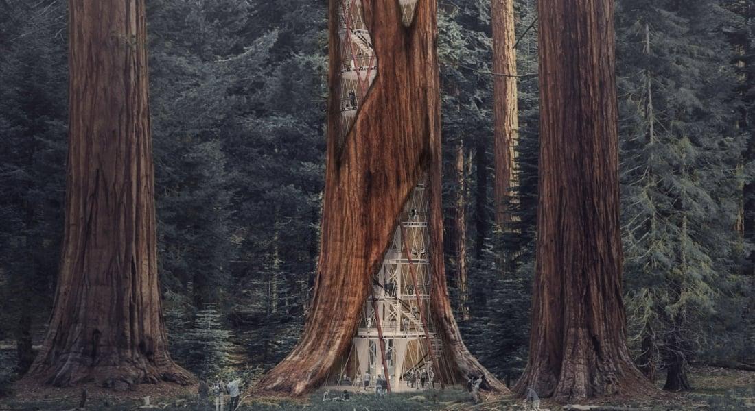 Çürümüş Ağaçları Ayakta Tutan Dev Sekoya Gökdelenler