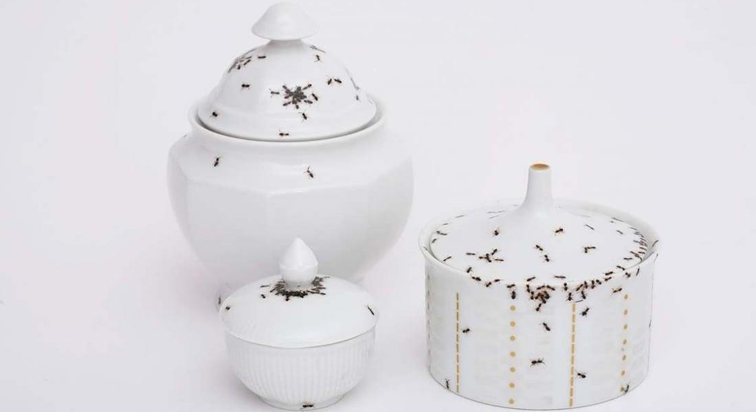 Karınca İstilasıyla Süslenmiş Porselen Takımlar