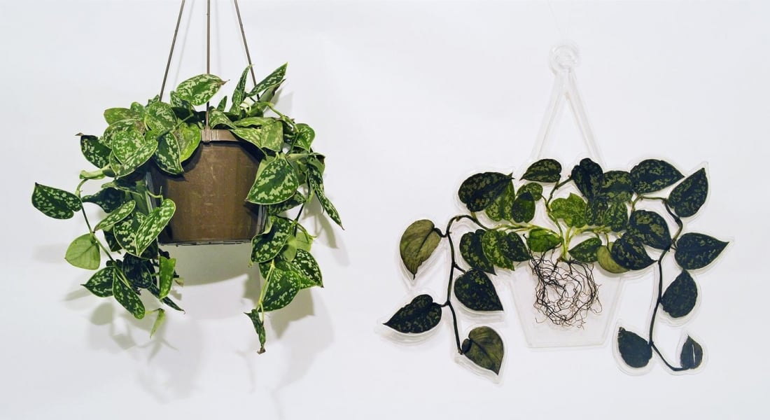 Bir Daha Asla Sulamanızı Gerektirmeyecek Bitkiler
