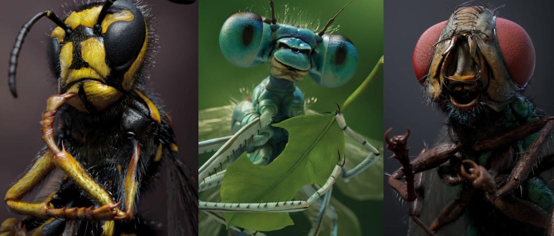 Böceklerin Çektirdiği Portre Fotoğraflar