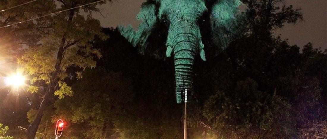 Ağaçlara Yansıtılan Hareketli Hayvan Portreleri