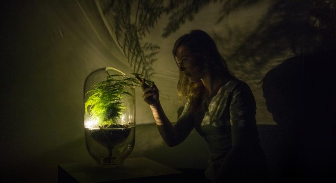 Bitkiler Elektriğe Dönüşüp Evinizi Aydınlatsın