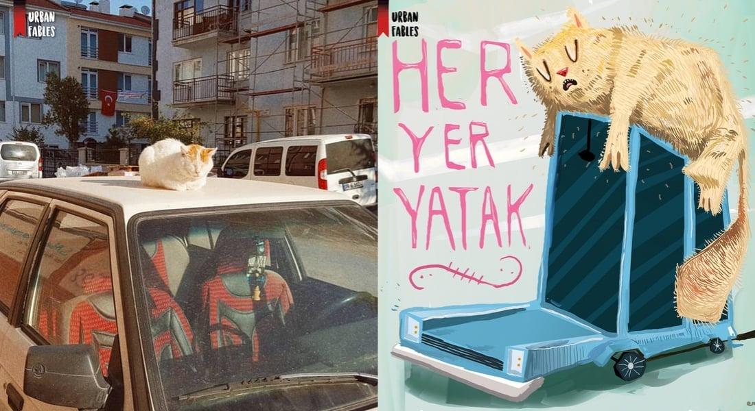 Türkiye Sokaklarında Karşılaştığı Hayvanları Ölümsüzleştiren Sanatçılar