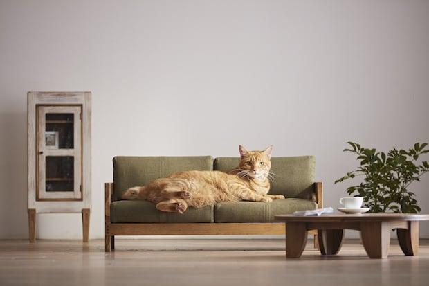 Kedi Boy Mobilyalar