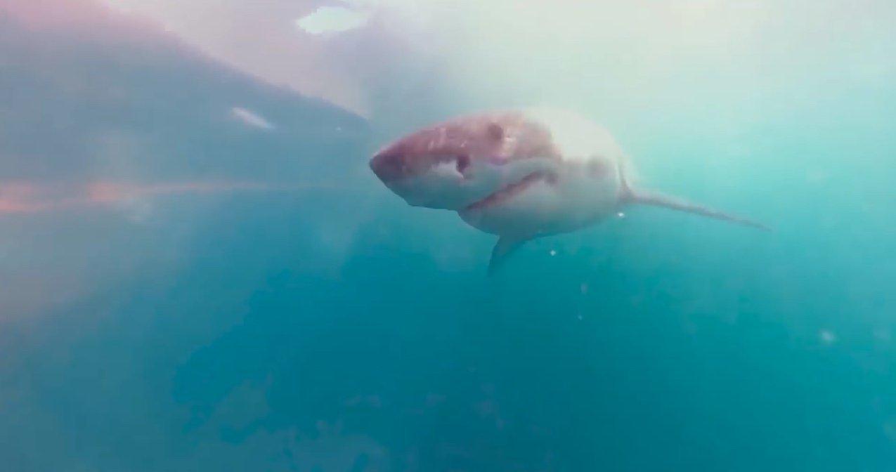 Sanal gerçeklik Vodafone Köpek Balığı