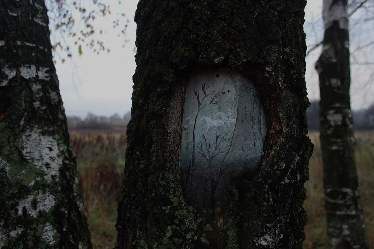 Ağaçlar Üzerinde Doğa Manzaraları