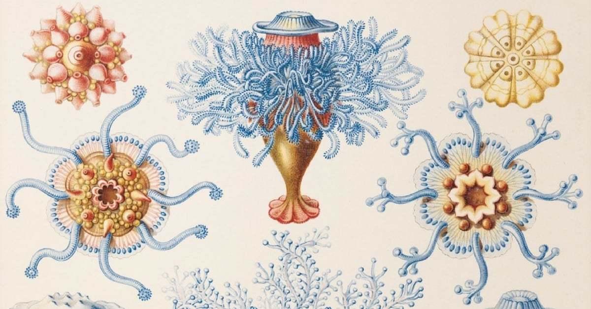 İnanılmaz Detaylarıyla 19. Yüzyıl Biyoloji İllüstrasyonları