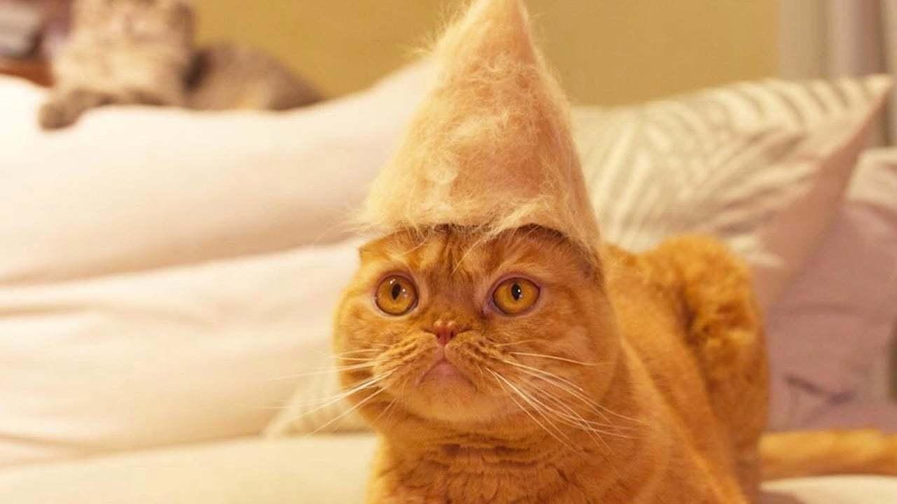 Şapka Çıkaran Kediler
