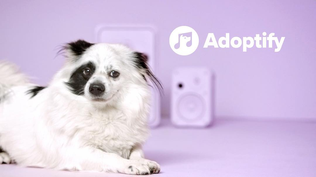 Köpeğinizle Müzik Zevkiniz Ne Kadar Uyumlu?
