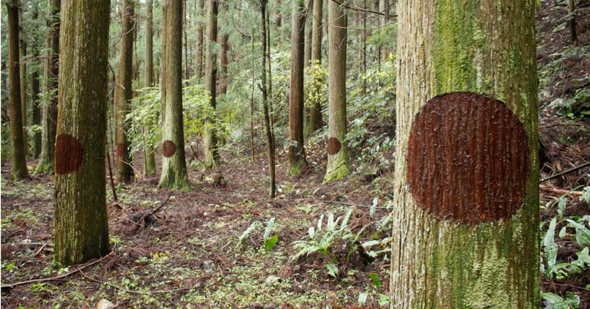 Ağaçların Gözleri