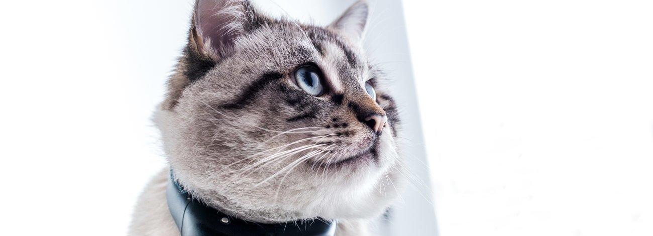 Kedi ve Köpekler İçin Yeni Özellikleriyle Tractive GPS