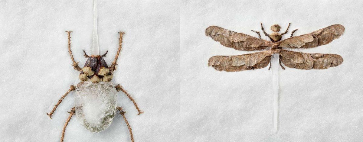 Yapraktan ve Buzdan Böcekler