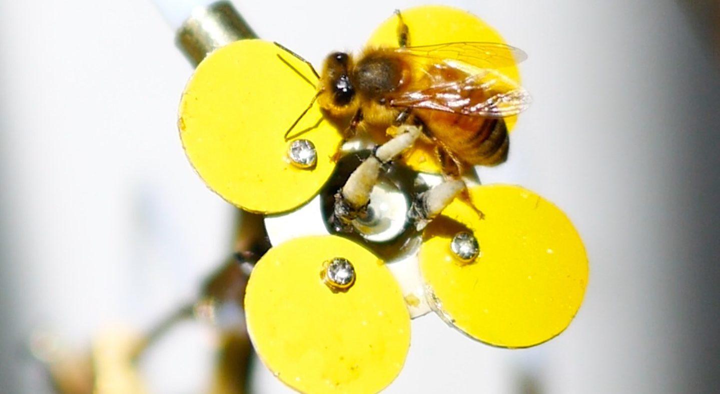 Her Çiçekten Bal Alan Arıların Yeni Favorisi