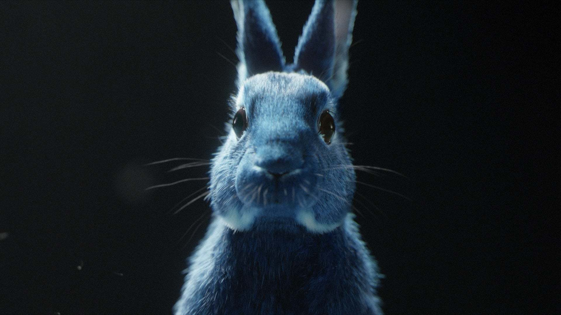 tavşan_o2_vccp_follow the rabbit_ingiltere_bigumigu_7