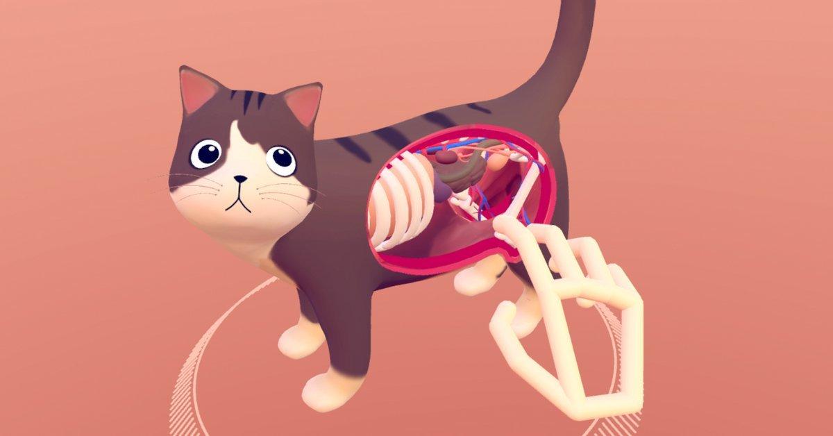 Sanal Gerçeklikte Kedi Anatomisini Keşfet
