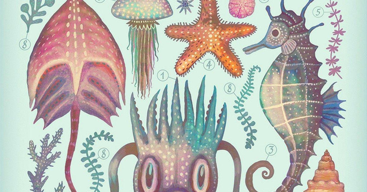 Ansiklopedilerdeki Vintage Estetikle Deniz Yaşamı İllüstrasyonları