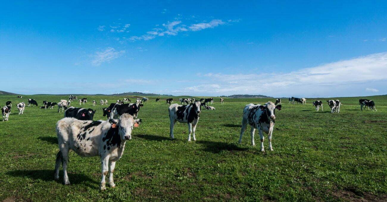 Et ve Süt Ürünü Tüketmemek Gezegeni Korumanın En Etkili Yolu