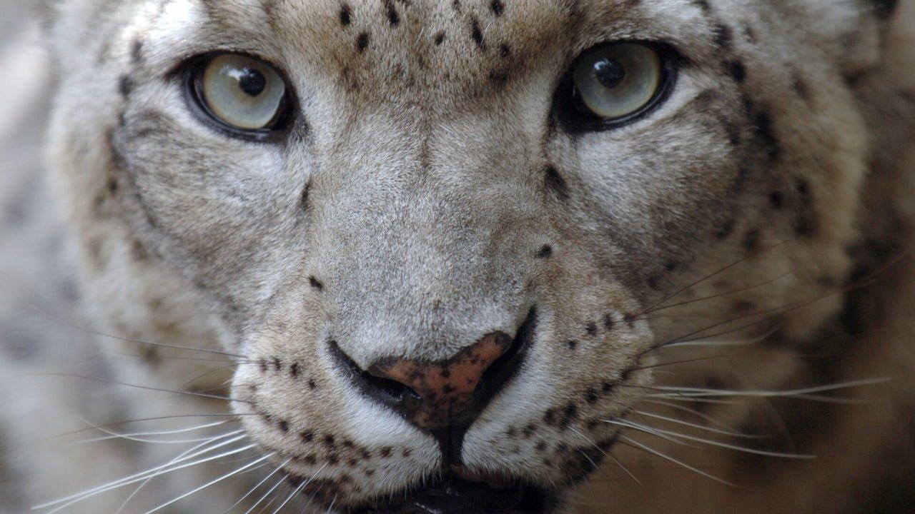lion's share_cannes lions 2018_bigumigu_