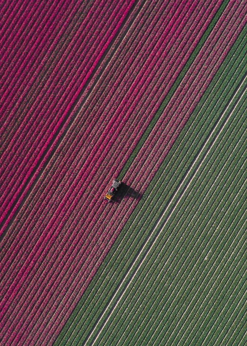 lale_tom hegen_the tulip series_bigumigu_