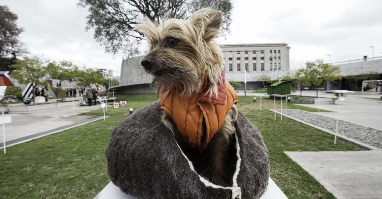 Sürdürülebilir Malzemeden Yapılan Köpek Evleri