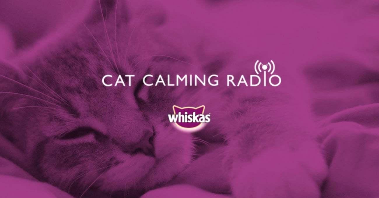Whiskas'tan Kedilere Özel Radyo Kanalı