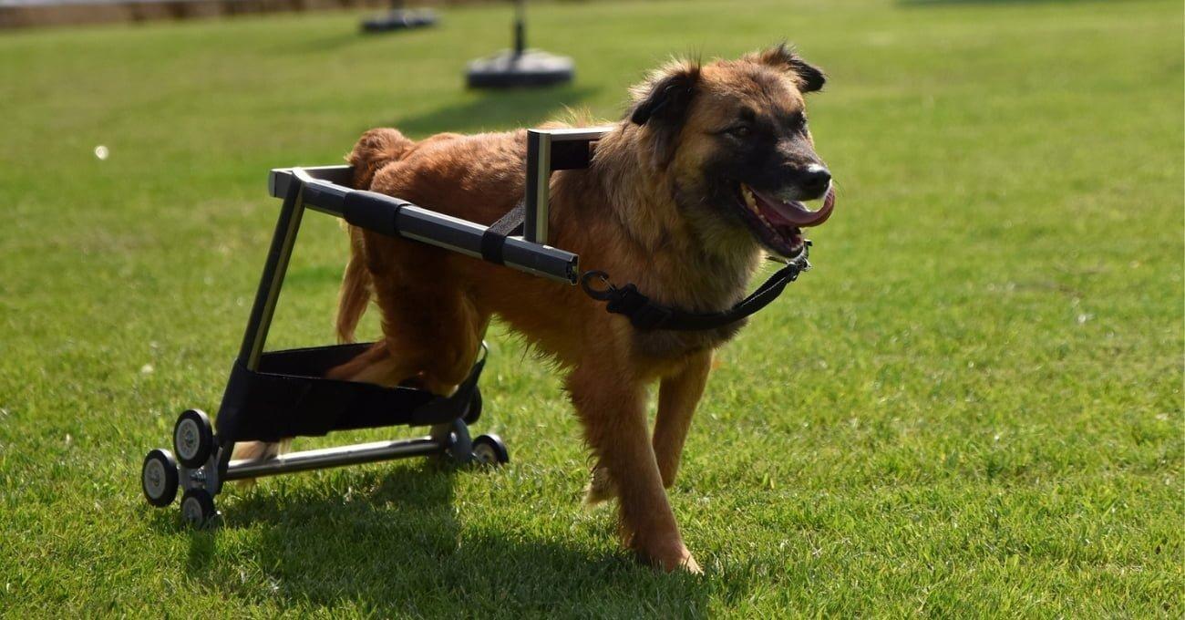 Vestel Geri Dönüşüme Ayrılan Ürünlerden Engelli Hayvanlara Yürüteç Yaptı