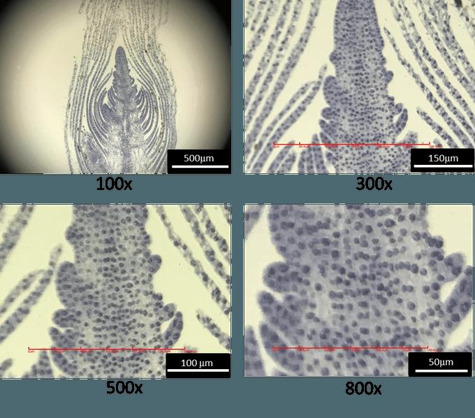 Akıllı Telefonla Çalışan 800X Mikroskop iMicro