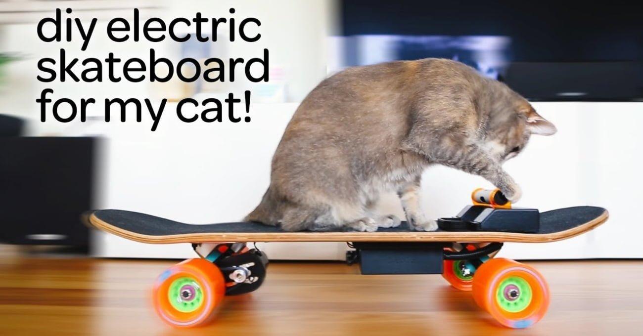 Kedisine Elektrikli Kaykay Yapan Tasarımcı