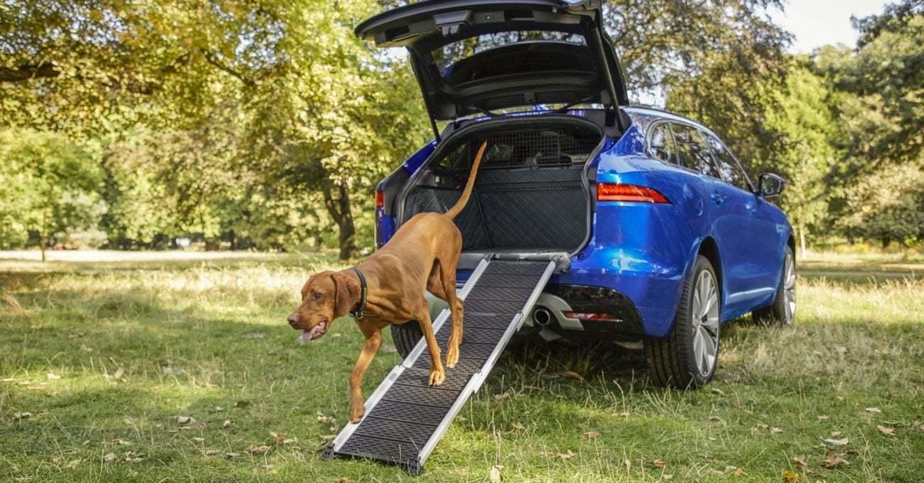 Jaguar Köpek Sahipleri için Yolculuğu Kolaylaştıran Aksesuarlar Sunuyor