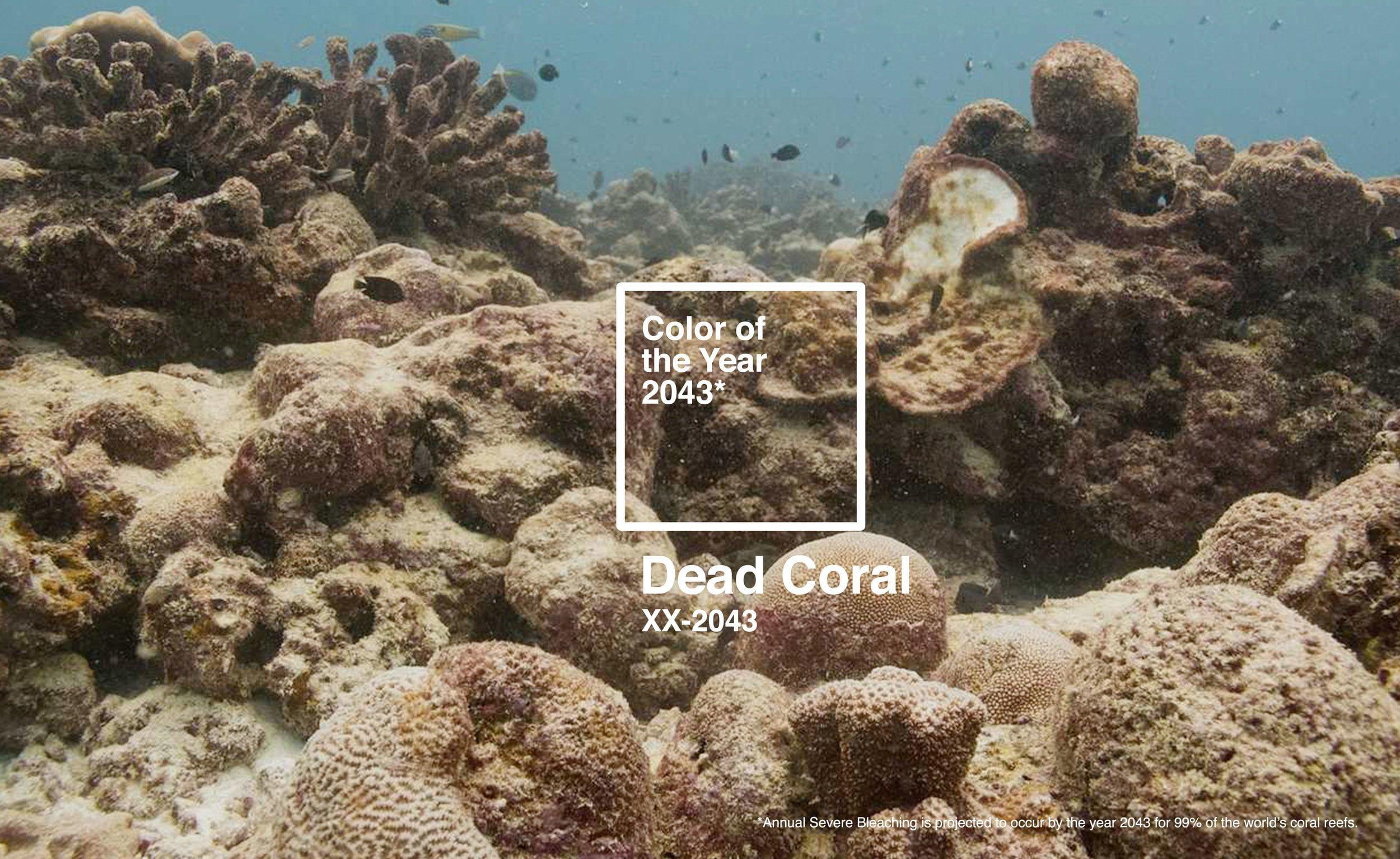 2043 Yılının Pantone Rengi Belirlendi: Ölü Mercan