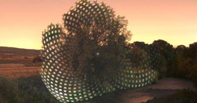 Ağaçlar Üzerine Yansıtılan Geometrik Desenler - Javier Riera