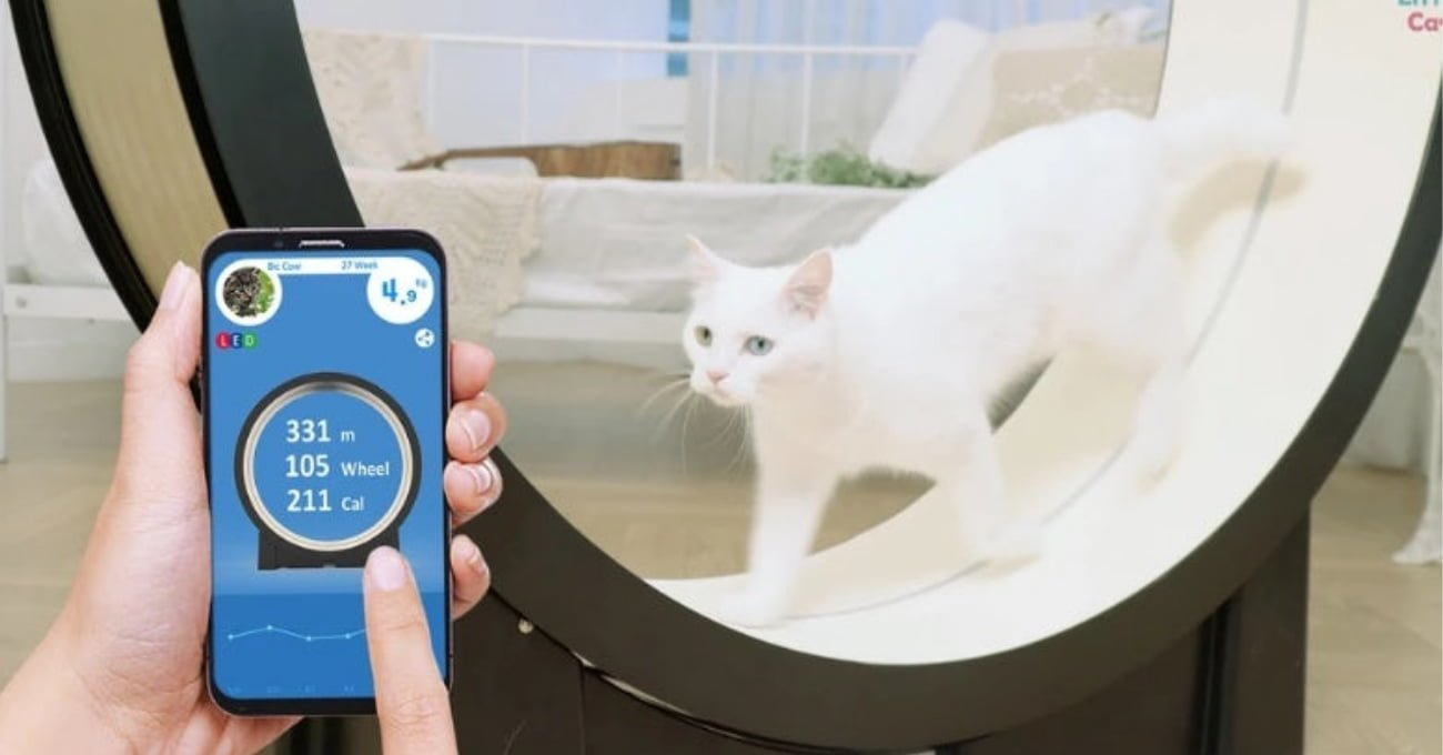 Kediler İçin Egzersiz Çarkı