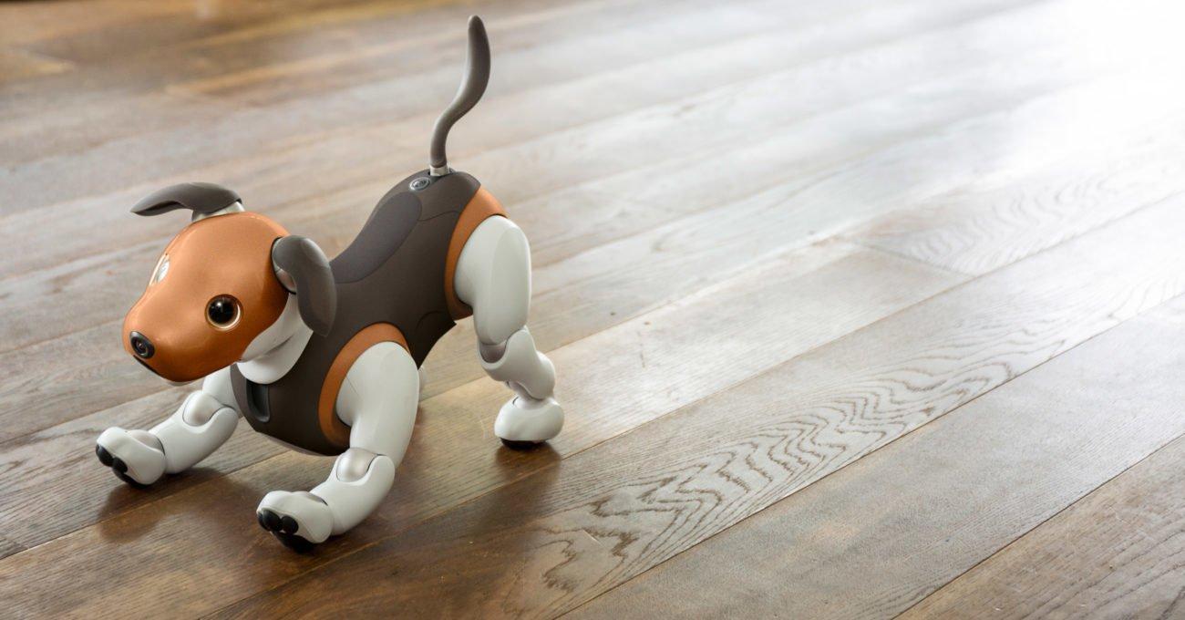 Robot Köpek Aibo Çikolata Rengiyle Beagle'a Benziyor