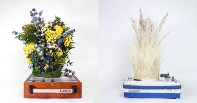 SpinPlant: Bitkilerin Melodileri