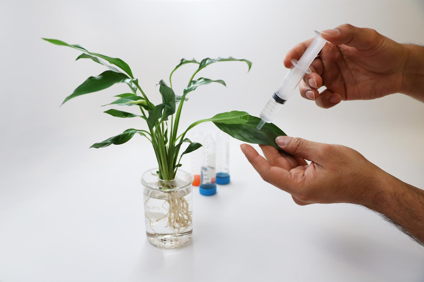 Su Kirliliğini Bitkilerdeki Nanosensörlerle Tespit Etmek [SXSW 2019]
