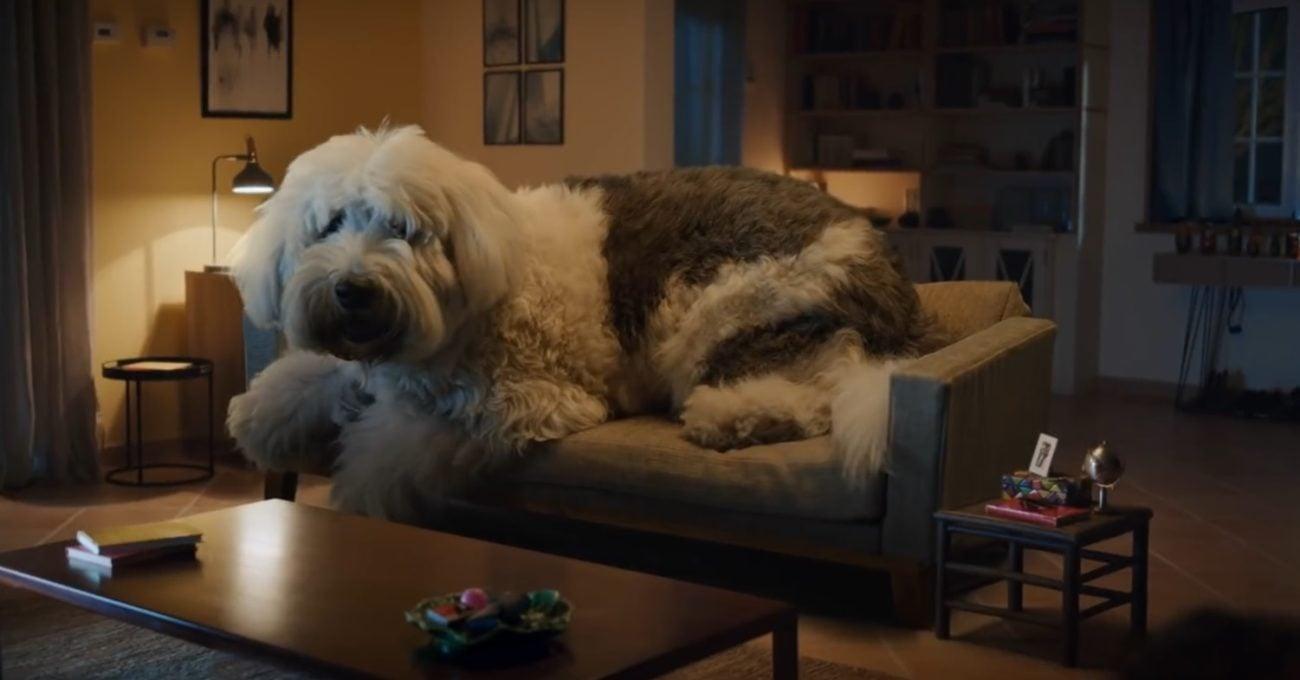 Köpeğiniz 1 Tonluk Bir Dev Olsaydı