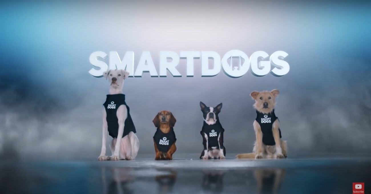 Siz Otomobil Kullanırken Güvenliği Sağlayan Akıllı Köpekler