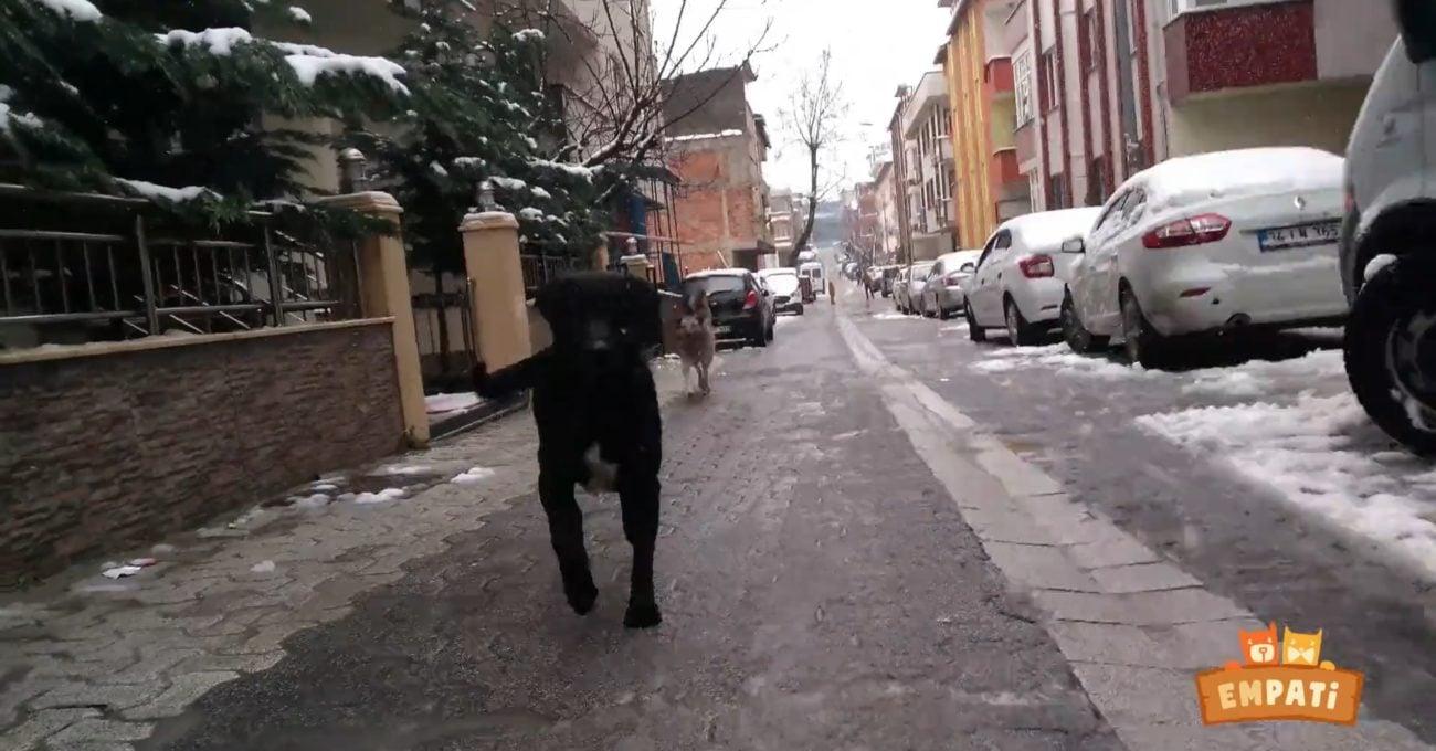Sokak Hayvanlarının Gözünden Onların Hayatı: Empati