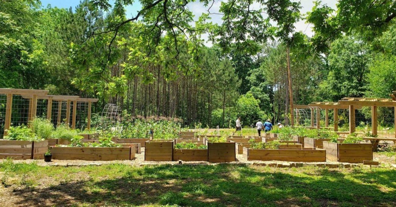 Kent Sakinleri İçin Gıda Ormanı