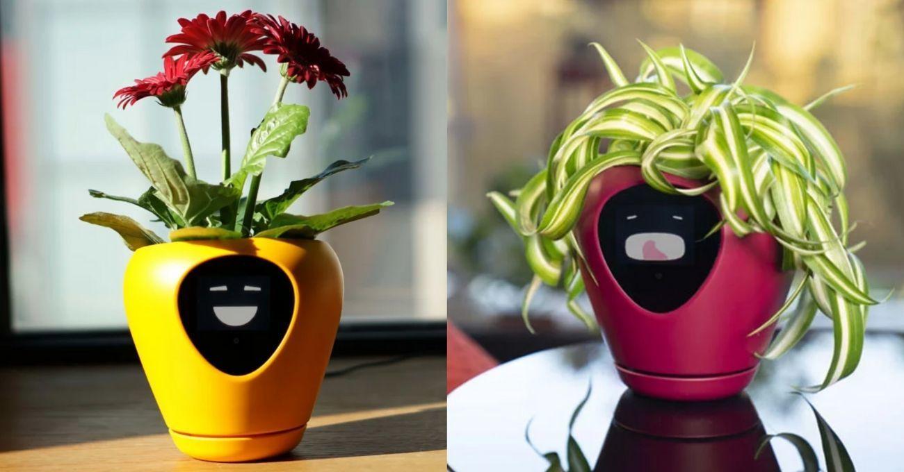 Bitkinin İhtiyaçlarını Yüz İfadesiyle Anlatan Akıllı Saksı