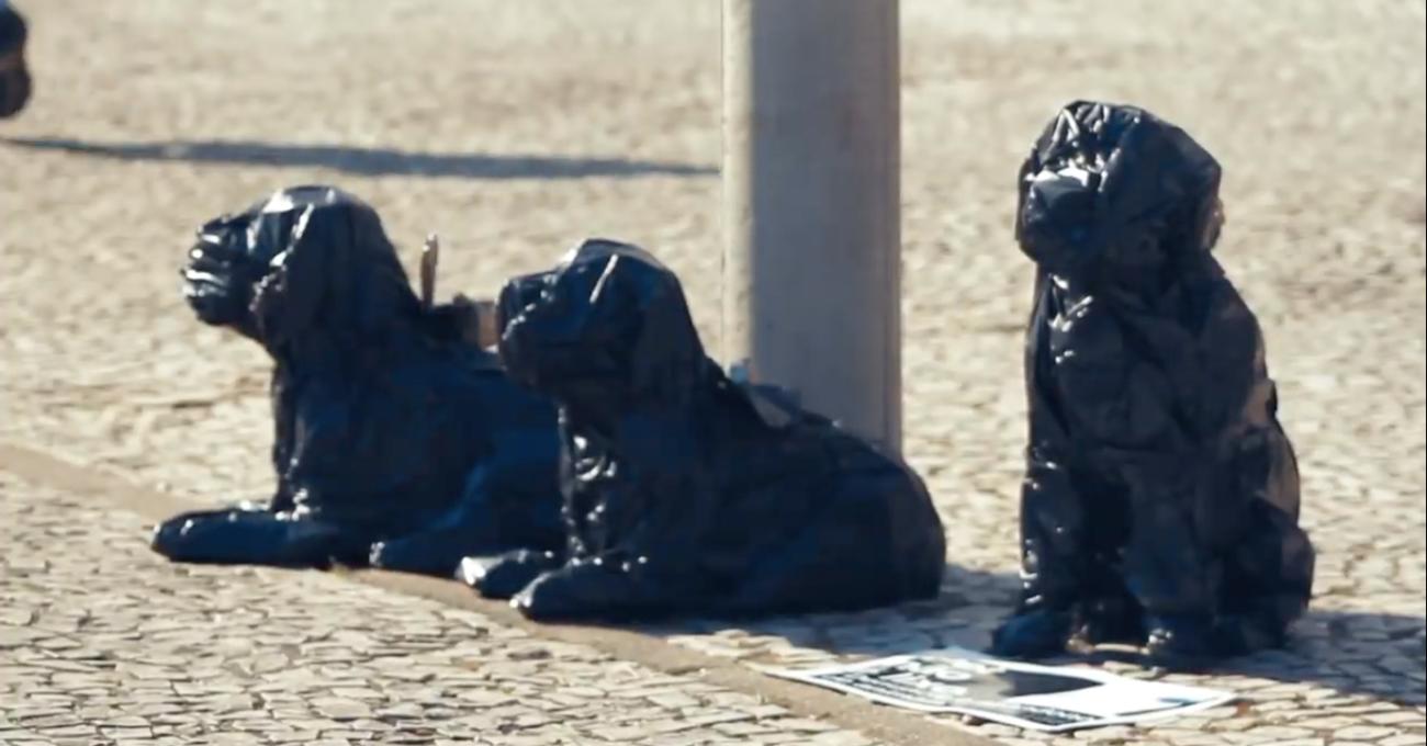 Evcil Hayvanlar Çöp Değildir