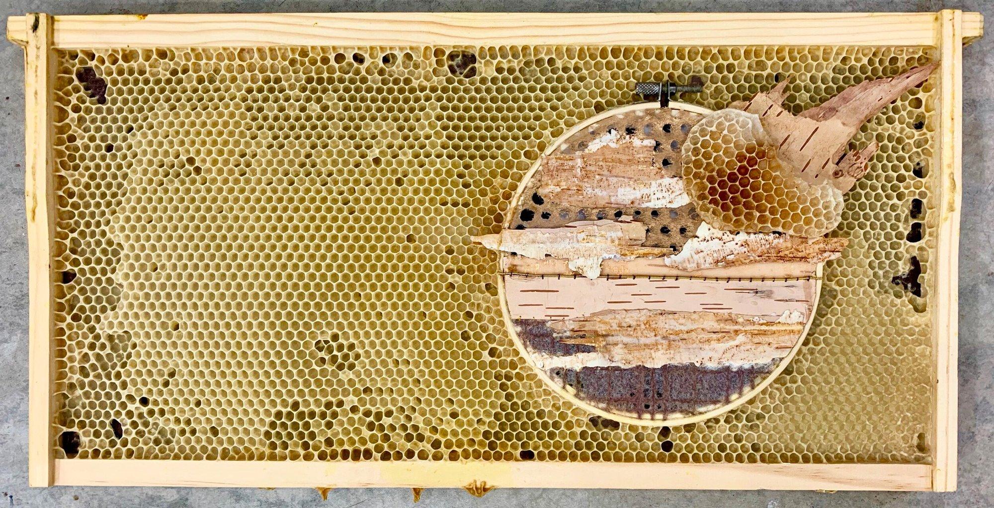 Sanatçı bal arılarının muhteşem eserleri
