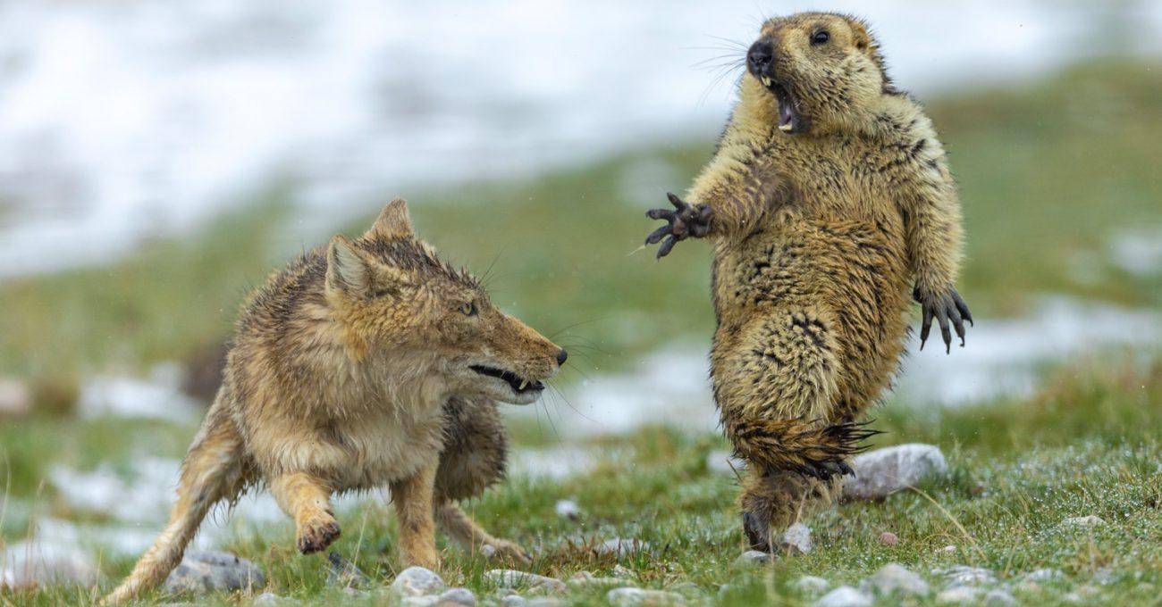Londra Doğa Tarihi Müzesi'nin Yarışmasından Yılın En İyi Vahşi Yaşam Fotoğrafları