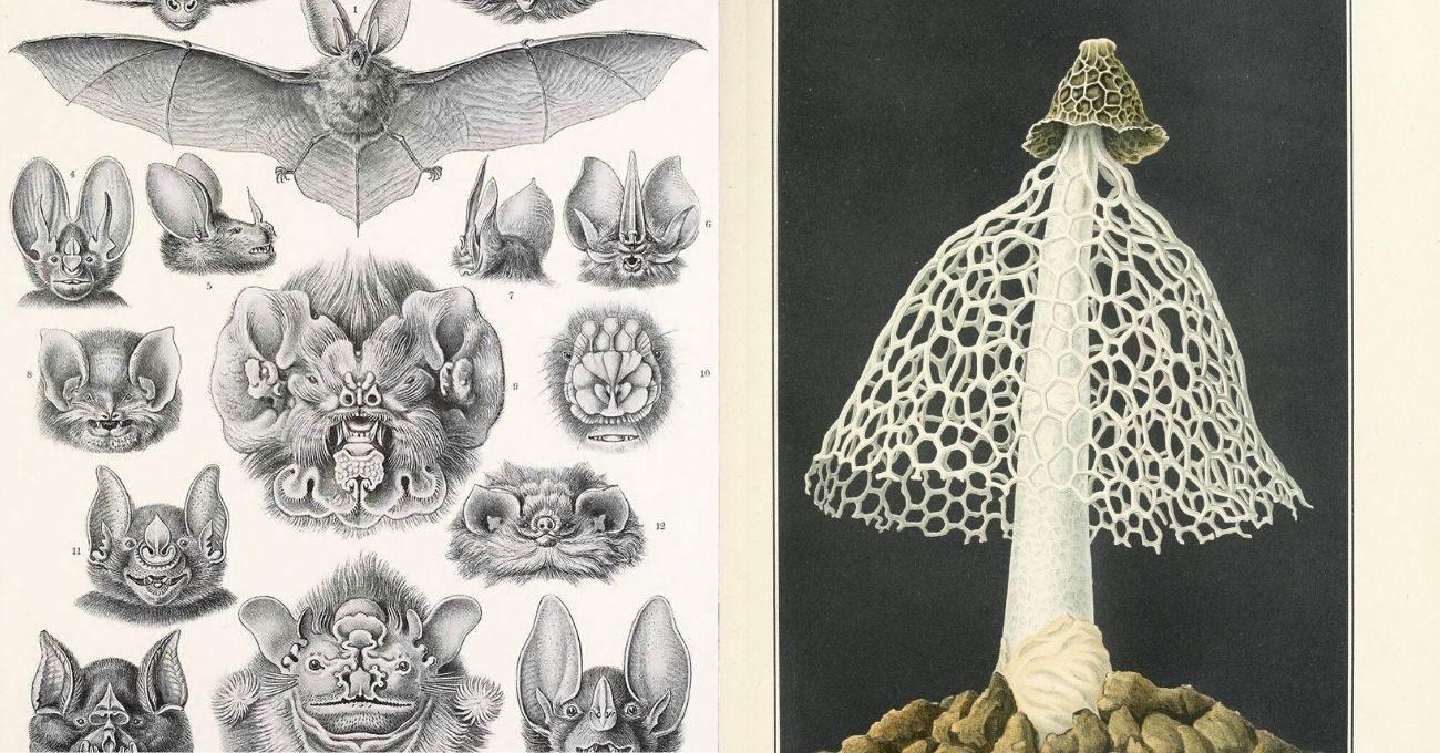150.000 Bitki ve Hayvan İllüstrasyonu Ücretsiz Olarak İnternete Açıldı