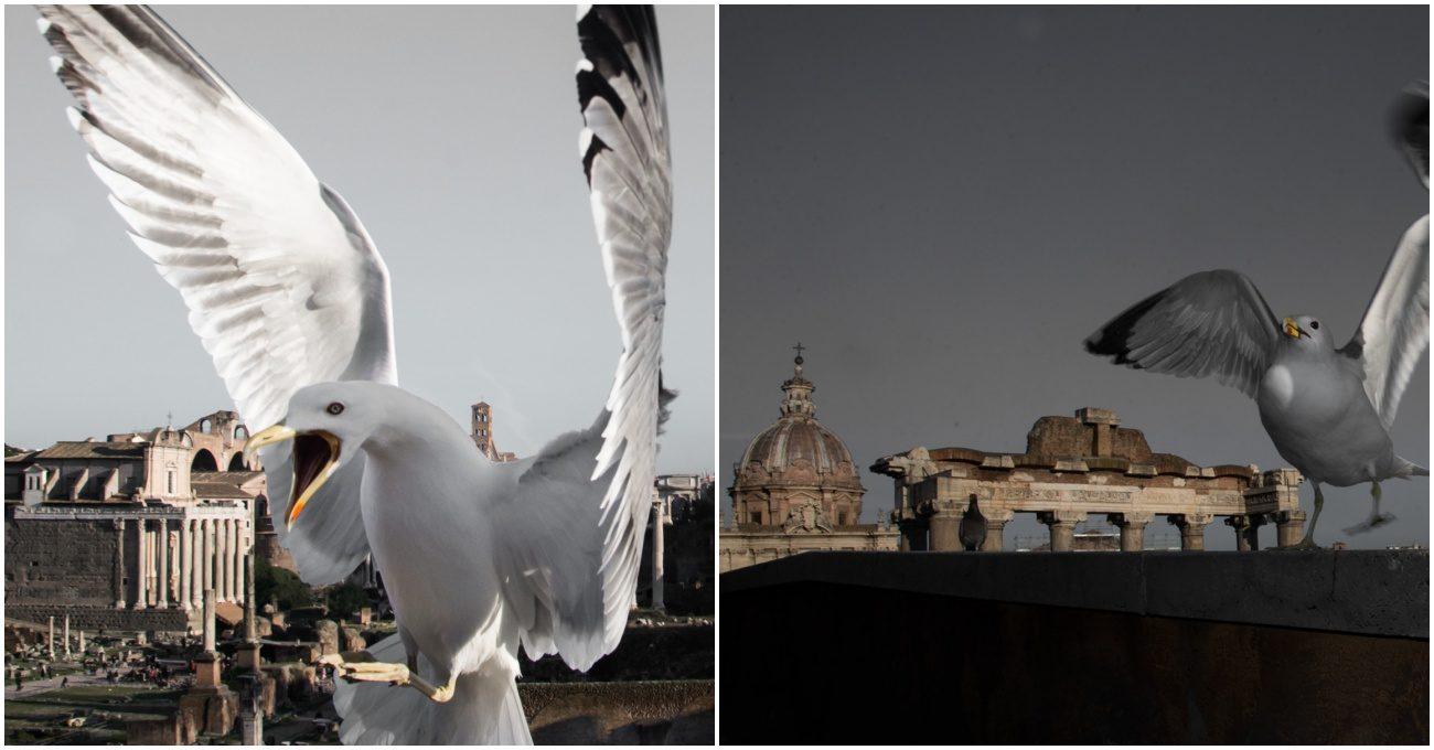 Roma Manzarasını Ansızın Kesen Kuşlar