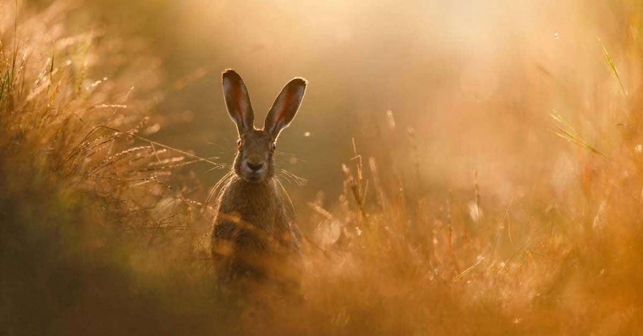 GDT Yılın Doğa Fotoğrafçısı Yarışmasının Kazananları Belli Oldu