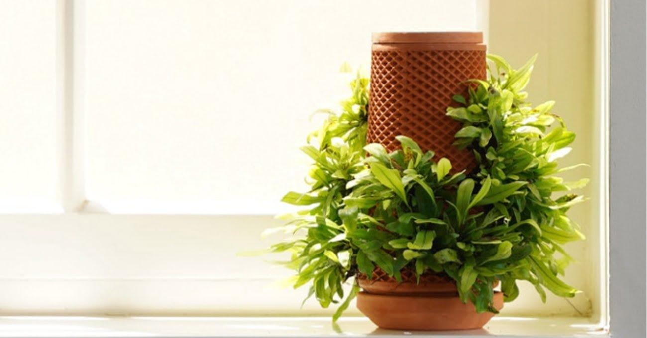 İç Mekanda Bitki Yetiştirmek için Hidroponik Saksı: Terraplanter